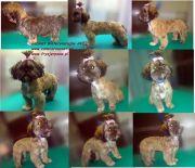 weterynarz-jaso-fryzjer-psow-szkolenie-psa-hotel-dla-psa